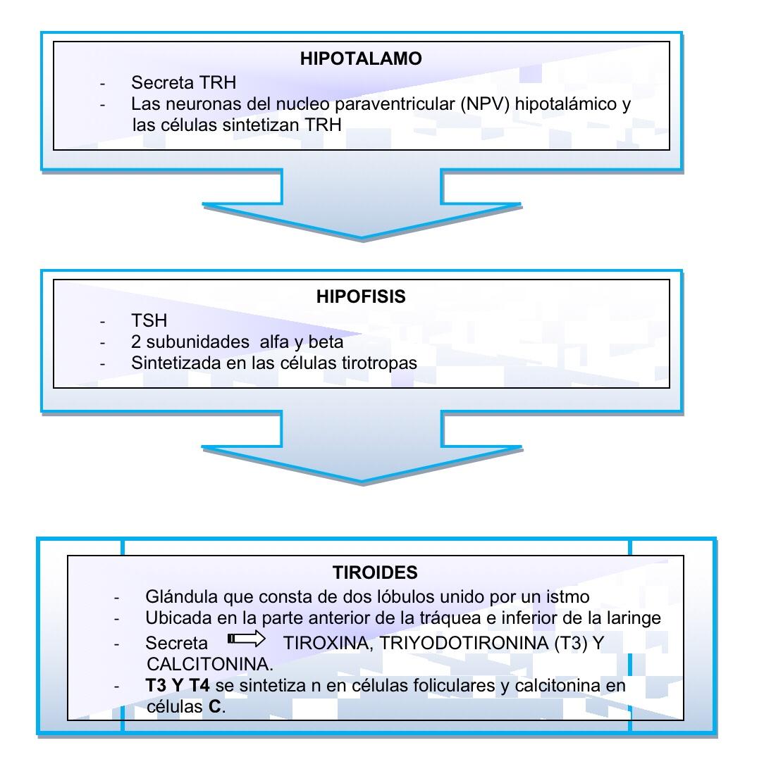 Hormona estimulante de tiroides baja
